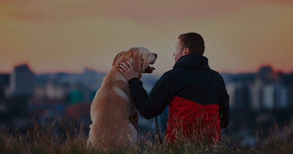 Gradient photo Golden Retriver and Male Owner sitting in Park