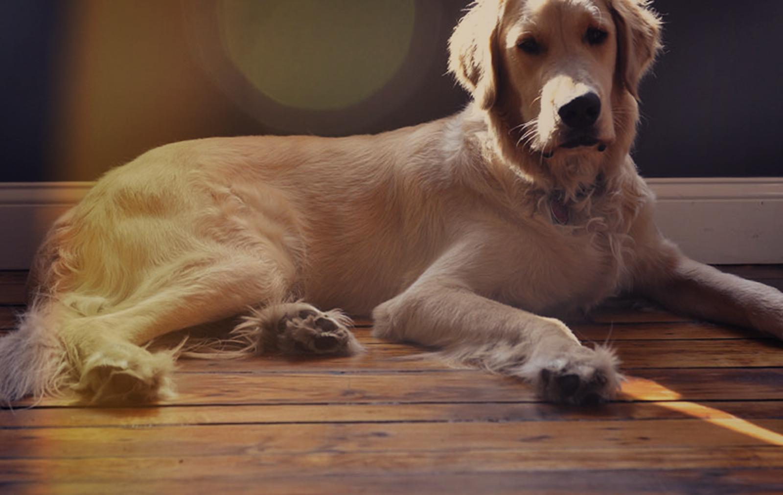 Web Design Office Dog at Push10